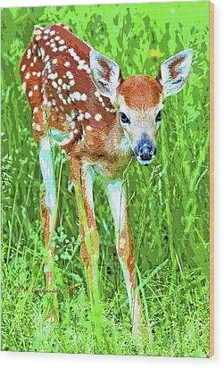 Wood Print featuring the photograph Whitetailed Deer Fawn Digital Image by A Gurmankin