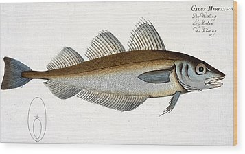 Whiting Wood Print by Andreas Ludwig Kruger