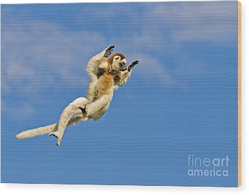 Who Needs Wings? Wood Print by Ashley Vincent
