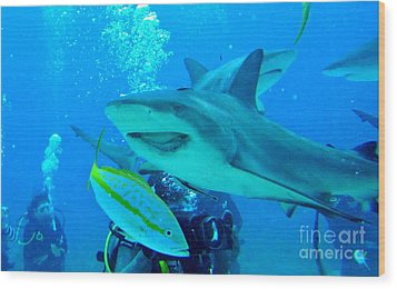 Who Said Sharks Were Mean Wood Print by John Malone