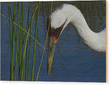 Whooping Crane Wood Print by David Tennis
