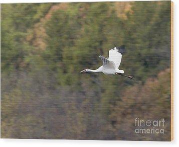 Whooping Crane Wood Print by Steven Ralser