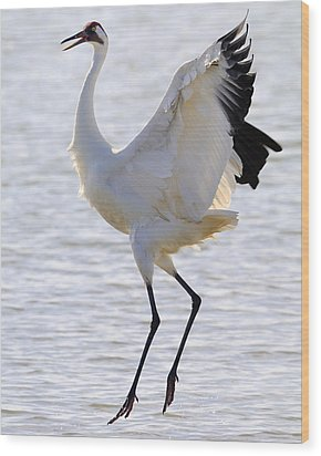 Whooping Crane - Whooping It Up Wood Print