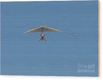 Whooping Cranes And Operation Migration Ultralight Wood Print by Paul Rebmann