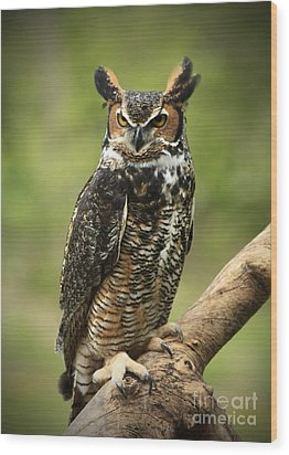 Whoos Watching Me Great Horned Owl In The Forest  Wood Print by Inspired Nature Photography Fine Art Photography