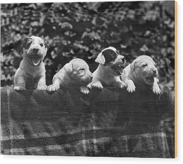 why I Love A Dog Prizes Wood Print by Underwood Archives