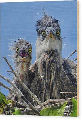 Wide Eyed Baby Herons Wood Print by Jennie Breeze