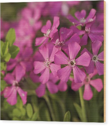 Wood Print featuring the photograph Wild About Pink - Pink Wildflower Art Print by Jane Eleanor Nicholas