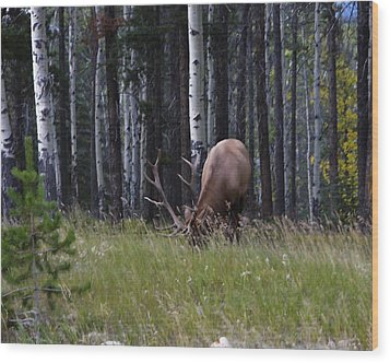 Wood Print featuring the photograph Wild And Free by Rhonda McDougall