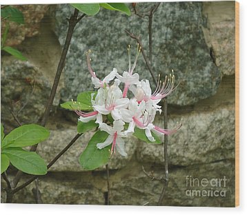 Wild Azalea Wood Print by Katie Spicuzza