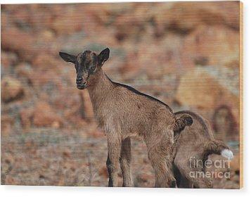 Wild Baby Goat Wood Print by DejaVu Designs