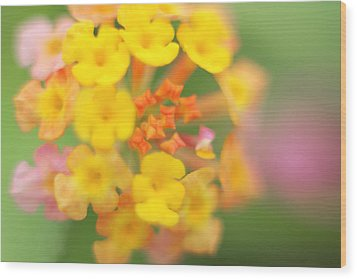 Wood Print featuring the photograph Wild Beauty by Afrison Ma