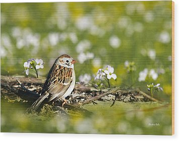 Wild Birds - Field Sparrow Wood Print by Christina Rollo