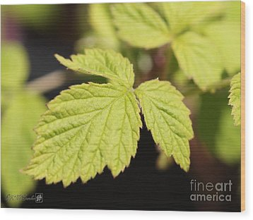 Wild Black Raspberry Leaves Wood Print by J McCombie
