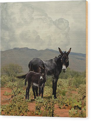 Wild Burros Of Tucson Wood Print by Schwartz