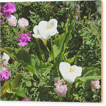 Wild Calla Lillies Wood Print