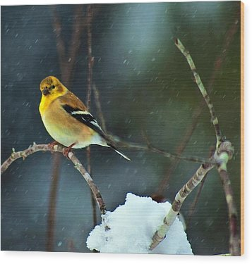 Wood Print featuring the photograph Wild Canary by John Harding