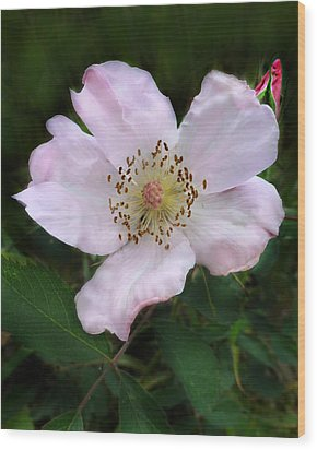 Wood Print featuring the photograph Wild Carolina Rose by William Tanneberger