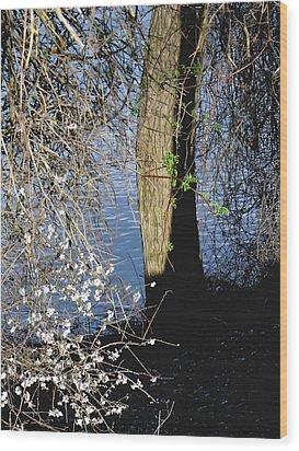Wild Cherry Tree On The Sacramento River  Wood Print by Pamela Patch