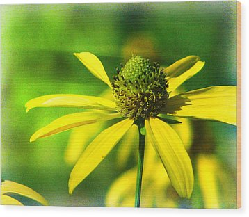 Wild Coneflower Secret Meadow Sandia Mountains Albuquerque New Mexico Wood Print