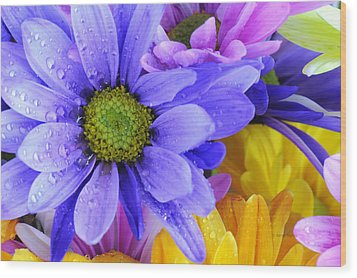 Wild Crazy Daisies 2 Wood Print by Kenny Francis