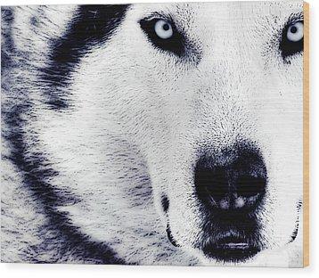Wild Eyes Wood Print by VRL Art
