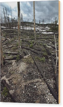 Wood Print featuring the photograph Wild Fire Aftermath by Amanda Stadther