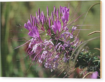 Wild Flower Wood Print by Cynthia Snyder