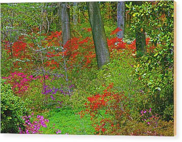 Wild Flower Garden Wood Print by Andy Lawless
