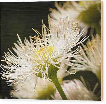 Wood Print featuring the photograph Wild Flowers by Cathy Donohoue