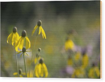 Wild Flowers Wood Print by Daniel Sheldon