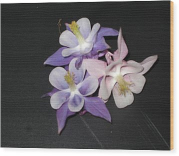 Wild Flowers On Black Wood Print
