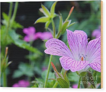 Wood Print featuring the photograph Wild Geranium Flowers by Clare Bevan