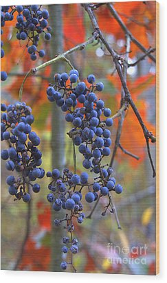 Wood Print featuring the photograph Wild Grapes by Jim McCain