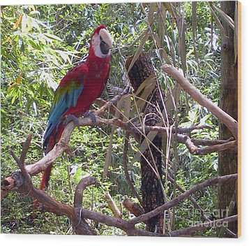 Wood Print featuring the photograph Wild Hawaiian Parrot  by Joseph Baril