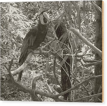 Wood Print featuring the photograph Wild Hawaiian Parrot Sepia by Joseph Baril