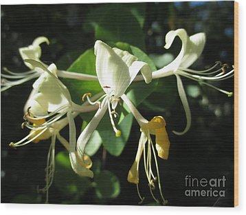 Wild Honeysuckle Wood Print