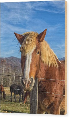 Wild Horse At Cades Cove In The Great Smoky Mountains National Park Wood Print