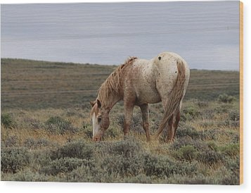 Wood Print featuring the photograph Wild Horse by Christy Pooschke