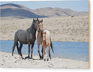 Wild Horse Family Wood Print by Lula Adams