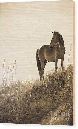 Wild Horse On The Beach Wood Print by Diane Diederich