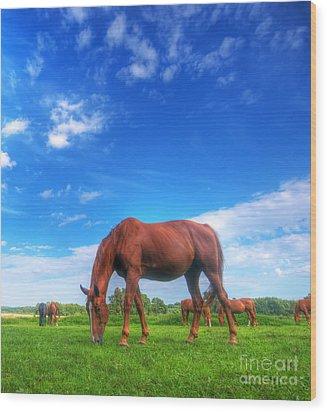 Wild Horse On The Field Wood Print by Michal Bednarek