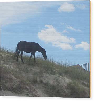 Wild Horses Of Corolla 3 Wood Print by Cathy Lindsey