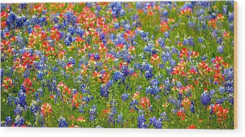 Wild In Texas Wood Print by David  Norman
