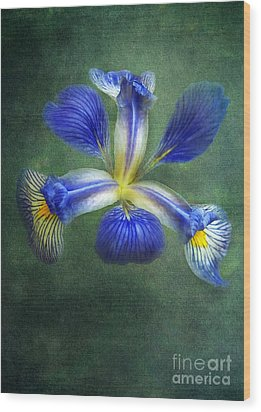 Wild Iris Wood Print by Kathi Mirto