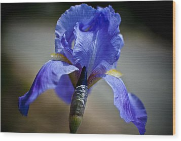 Wild Iris Wood Print by Ron White