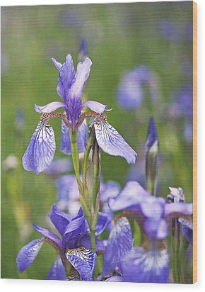 Wild Irises Wood Print
