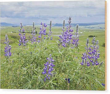 Wild Lupine Wood Print by Theresa Tahara