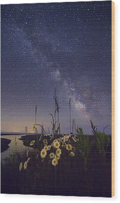 Wild Marguerites Under The Milky Way Wood Print by Mircea Costina Photography