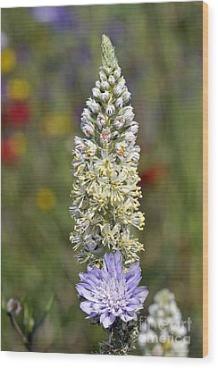 Wood Print featuring the photograph Wild Mignonette Flower by George Atsametakis